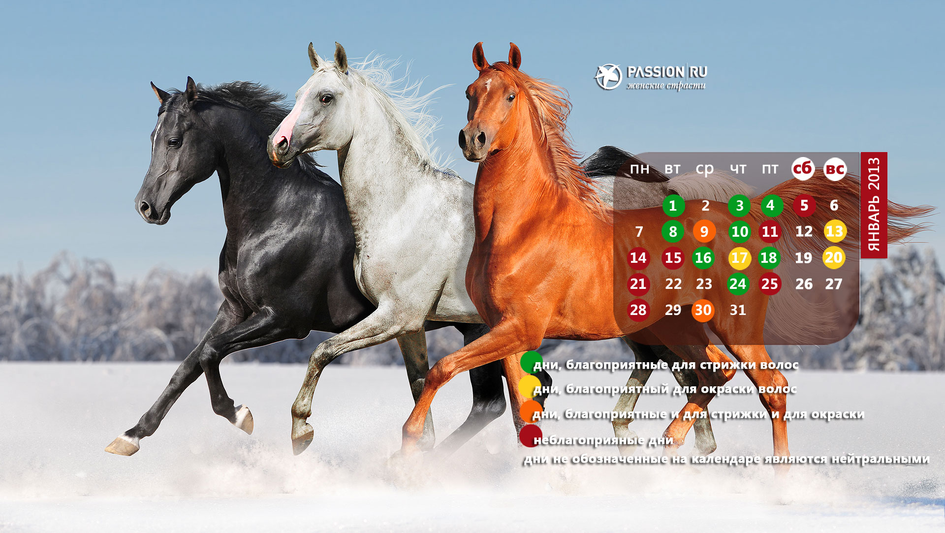 год лошади обои для рабочего стола № 528446  скачать
