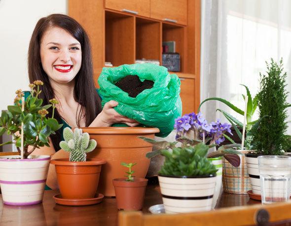 Почему в доме гибнут комнатные растения