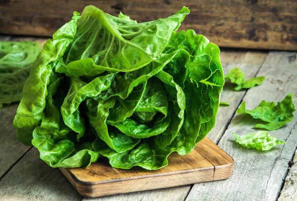 Картинки по запросу салатные листья