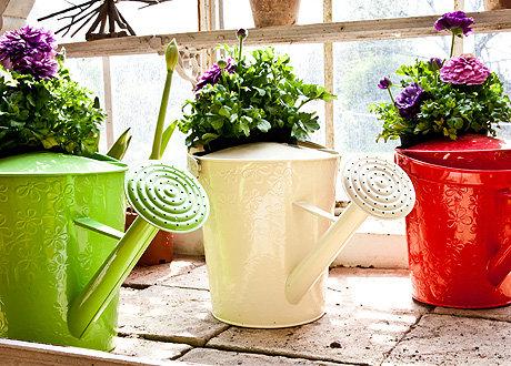 Как правильно поливать цветы домашние