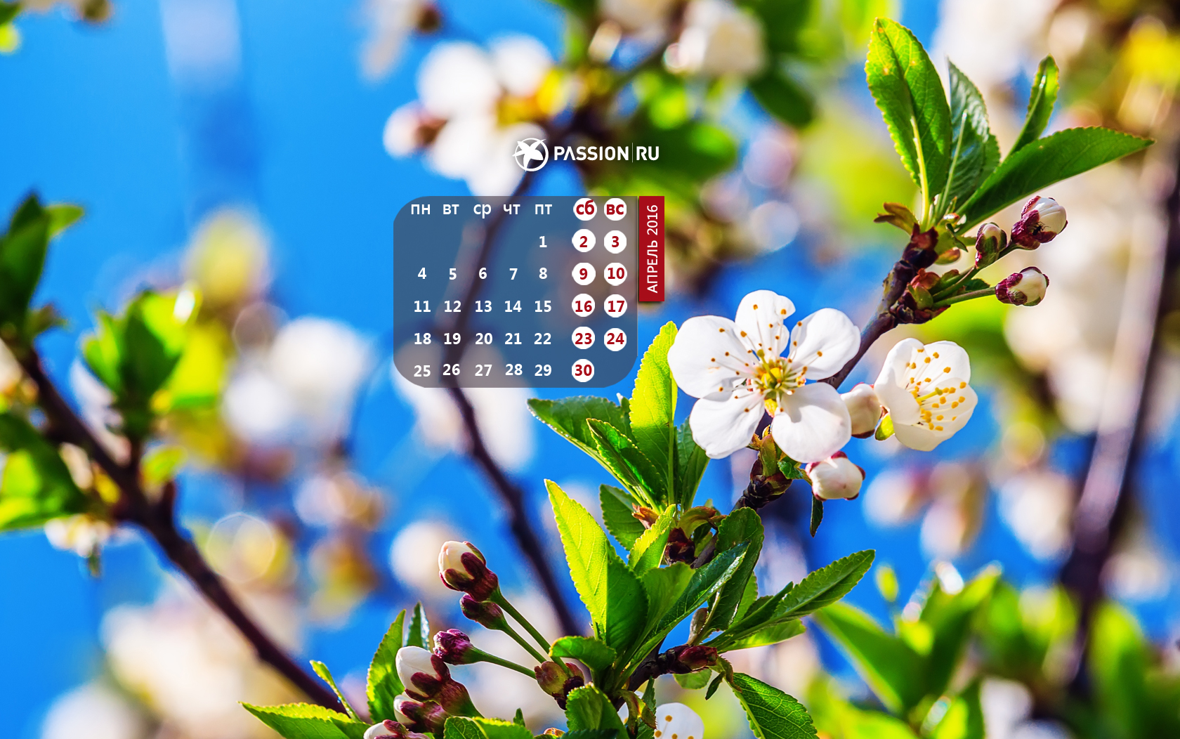 пассион ру обои на рабочий стол с календарем август 2017 № 16851 загрузить
