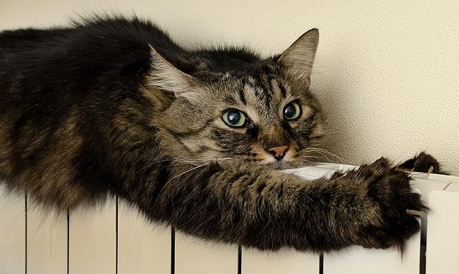Тепло, еще теплее, горячо: как отопление влияет на кошек и собак   Passion.ru