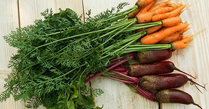 Чем полезны ботва моркови, ботва редиски и свекольная ботва