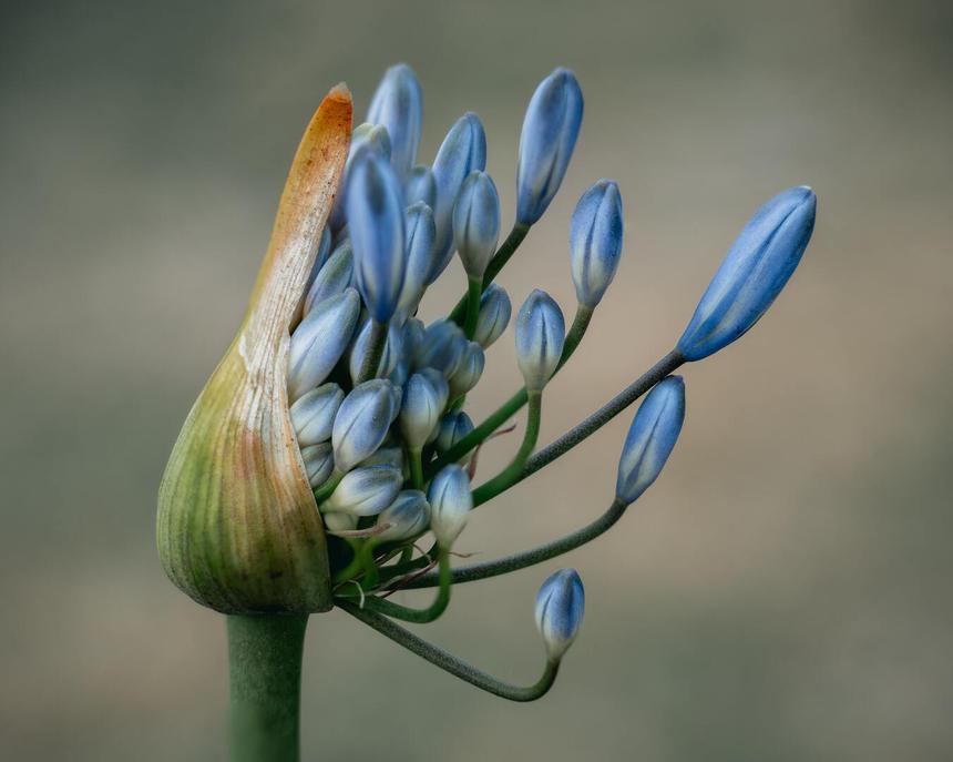 Аллергия на пыльцу, пыль и не только: Королева и другие звезды, страдающие от недуга
